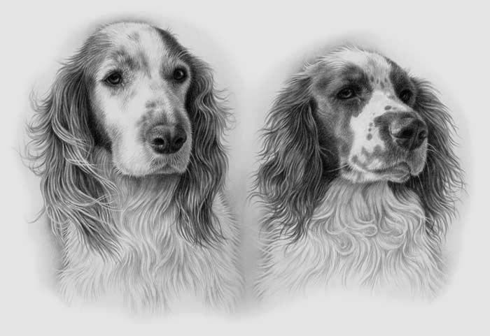 two dogs, spaniels pet portrait in black and white
