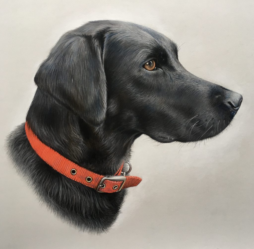 Pastel black lab drawing portrait