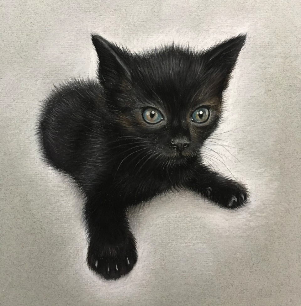pet portrait kitten in pastel