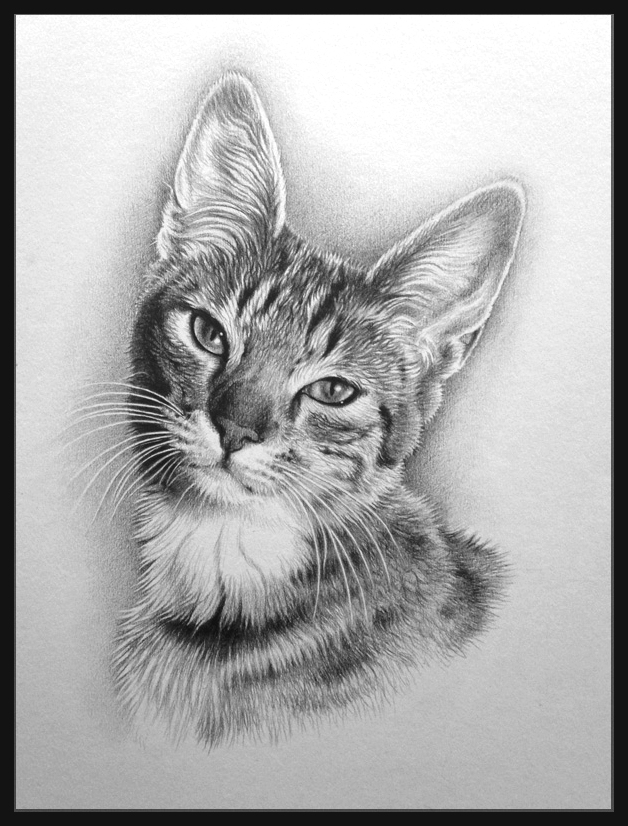 tabby cat pencil pet portrait by Julie Rhodes