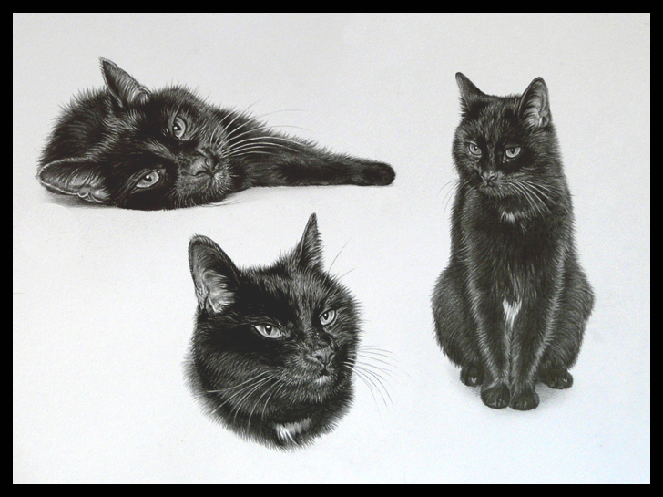 black cat trio pet portrait in pencil