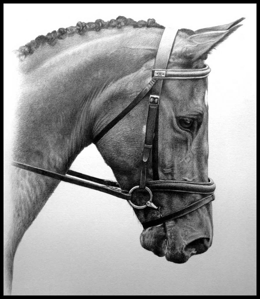 Horse pencil pet portrait