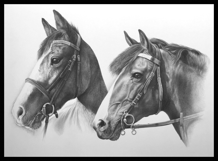 horses pet portrait commission pencil drawing
