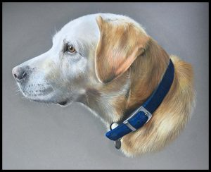 pastel pet portraits drawing by Julie Rhodes labrador