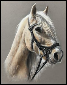 pony pencil pastel drawing pet portrait by Julie Rhodes